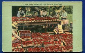 Southern Missouri Ozark strawberries old postcard