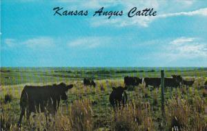 Kansas Angus Cattle