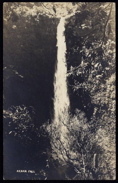 Early 20th c. Akaka Falls pouring freely into the forest in Hawaii real photo pc