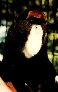 Nebraska Omaha Henry Doorly Zoo Debrazza Monkey