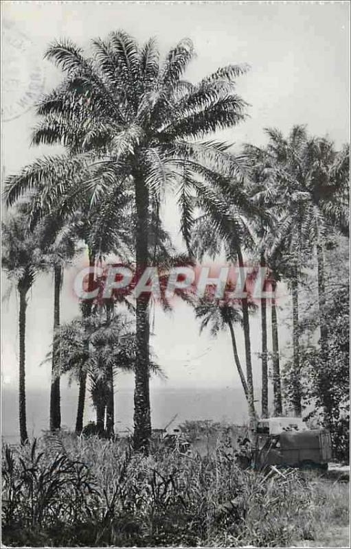 Modern Postcard Guinea Conakry Cabbage trees
