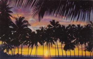Hawaii Sunset Through The Palms 1956