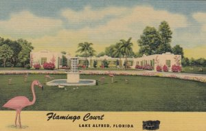 LAKE ALFRED , Florida , 1930-40s ; Flamingo Court
