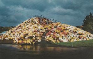 Chrysanthemum Mountain at Schwenksville PA, Pennsylvania - Flowers