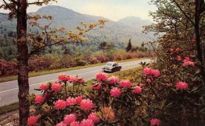 HOOD CANAL, WA Rhododendron Flowers Olympic Peninsula c1950s Vintage Postcard