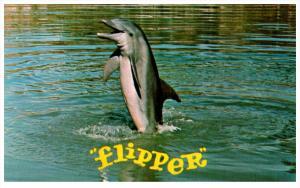 19937  Flipper   tail walk