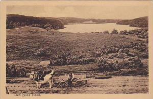 Den jyske Hede , Denmark , 00-10s