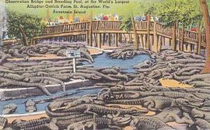 Florida St Augustine Anastasia Island Alligator-Ostrich Farm