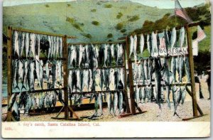Santa Catalina Island, California Postcard A Day's Catch Fishing 1909 Cancel