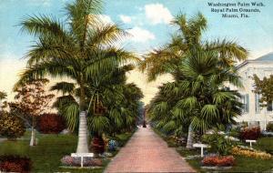 Florida Miami Royal Palm Grounds Washington Palm Walk Curteich