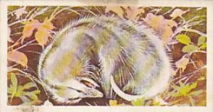Brooke Bond Vintage Trade Card Wonders Of Wildlife 1976 No 45 Virginia Opposu...