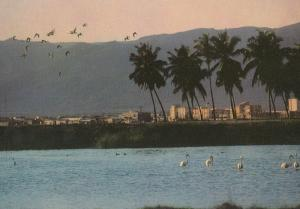 Salalah Bird Sanctuary at Sunset Saudi Arabia Postcard