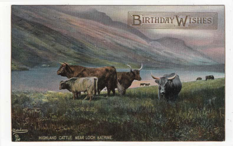 Early birthday greetings pc highland cattle near loch katrine early birthday greetings pc highland cattle near loch katrine raphael tuck m4hsunfo