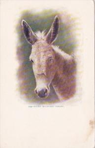Donkey A Rocky Mountain Canaray