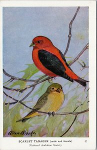 Allan Brooks Artist Scarlet Tanager Birds National Audubon Society Postcard G93