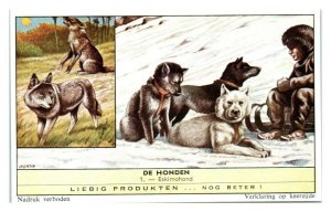 Eskimo Dog Eskimohond, Dog Breeds II Liebig Belgian Trade Card *VT28C