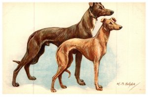 Dog  , Greyhounds and whippet