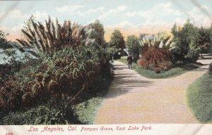 LOS ANGELES, California, 1900-1910s; Pampas Grass, East Lake Park