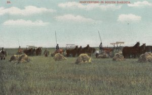 South Dakota , 1900-10s ; Harvesting