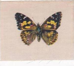 R J Lea Golden Knight Vintage Silk Cigarette Card Butterflies Painted Lady
