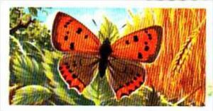 Brooke Bond Tea British Butterflies No 35 Small Copper