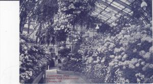 CHICAGO, Illinois, 1900-1910's; Crysantheum Show, Lincoln Park Conservatory