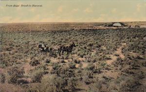 Man With Horse and Buggy From Sage Brush To Harvest