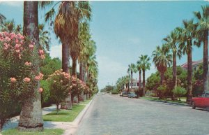 Galveston TX, Texas - Oleander Flowers and Palms on Residential Street