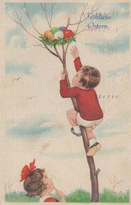 Daredevil Swiss Tree Climber Climbing Boy Easter Old Postcard