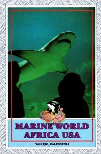 California Vallejo Marine World Africa USA Lemon Shark