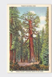 VINTAGE POSTCARD NATIONAL STATE PARK YOSEMITE GRIZZLY GIANT MARIPOSA GROVE