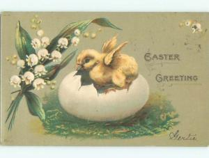 Divided-Back EASTER CHICK SCENE Cute Postcard AA0816