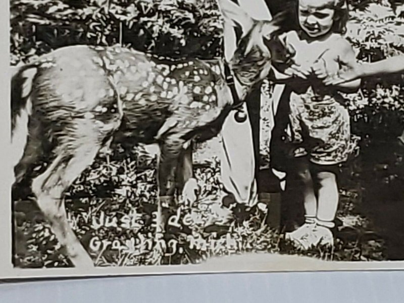 Vintage Postcard Just 3 Dears Grayling Michigan RPPC children with fawn deer 652