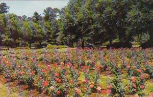 Edisto Gardens Orangeburg South Carolina