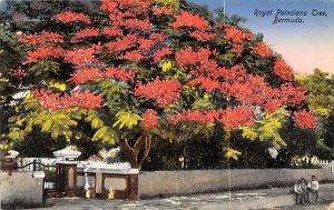 Bermuda Post card Old Vintage Antique Postcard Royal Poinciana Tree Unused