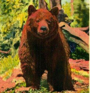 Bear at Attention Yellowstone National Park UNP Unused Vtg Linen Postcard