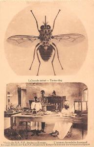 DR Congo Belge Tsetse fly, mouche tse-tse vlieg, examen malades au sommeil