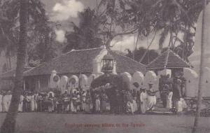 Ceylon Sri Lanka Elephant Carrying Tribute To The Temple