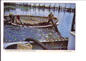 Men Hauling in Silver Herring, Weir, South Shore, New Brunswick,