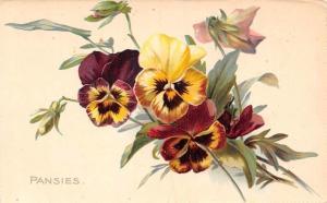 Pansy Pansies Flowers Fleurs, Raphael Tuck's