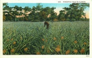 Asheville Teich Pineapple Field Florida #204 Postcard 10601