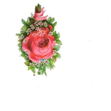 Vintage Victorian Scrapbook, Paper Decal, Pink and Red Rose