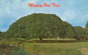 Hawaiian Monkey Pod Tree, Hawaii unused Postcard