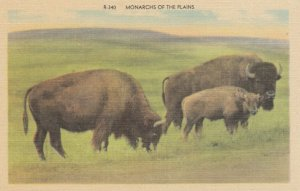 BLACK HILLS of South Dakota, 30-40s; Bison, Monarchs of the Plains