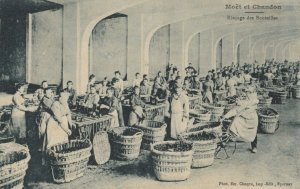 MOET & CHANDON , France, 1900-10s ; Champagne Production #3