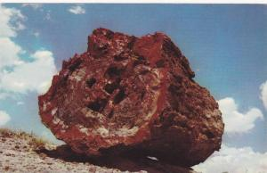 A large petrified Log in Petrified Forest, National Monument, Arizona,1940-1960s