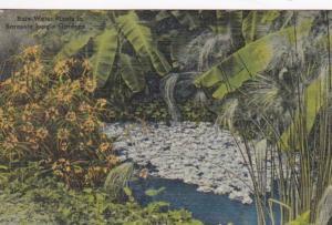 Florida Sarasota Rare Water Plants In Sarasota Jungle Gardens