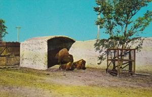 South Dakota Sioux Falls At Great Plains Zoo