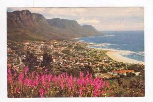 Watsonias On The Slopes Of Lion's Head Overlooking Camps Bay In Background,  ...