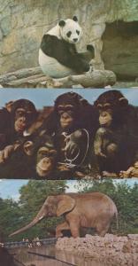 London Zoo Chi Chi Panda Elephant Chimpanzee 4x Postcard s